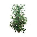 Piante fiori a cornuda bouquet addobbi per matrimoni - Gardenia pianta da interno o esterno ...